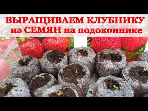Как вырастить КЛУБНИКУ / Садовую ЗЕМЛЯНИКУ из СЕМЯН на подоконнике