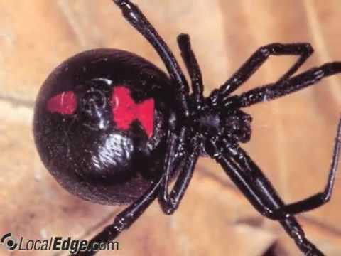 Economy Pest Control Service Fayetteville Nc
