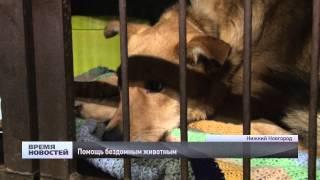 Почти 2,5 тысячи безнадзорных животных вылечили и стерилизовали в Нижнем Новгороде в 2014 году