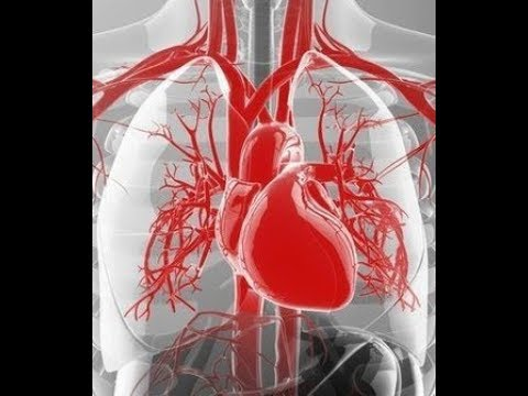 cardiovascular system anatomy review blood vessel strutrue and function