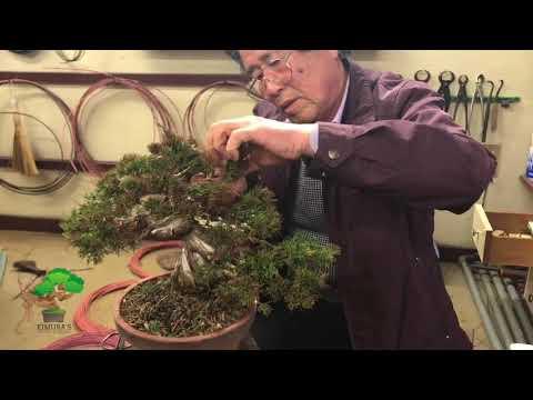 Pruning and wiring by Masahiko Kimura Part 4 (final part)