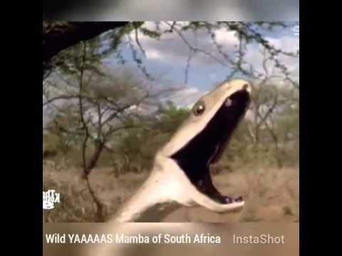 Yaaaaas Mamba