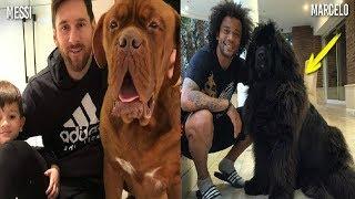 Futbolcular ve Evcil Hayvanları (Ronaldo, Özil, Neymar)