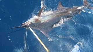 Blue Marlin Trip of a Lifetime! Costa Rica Fishing -Ft. Connley Fishing