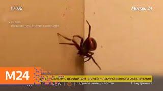Что делать в случае укуса ядовитого паука - Москва 24