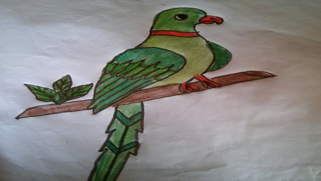 how to draw a parrot how to draw a parrot step by step easy for kids youtube