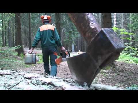 Il bosco scolpito di sergio frisanco youtube