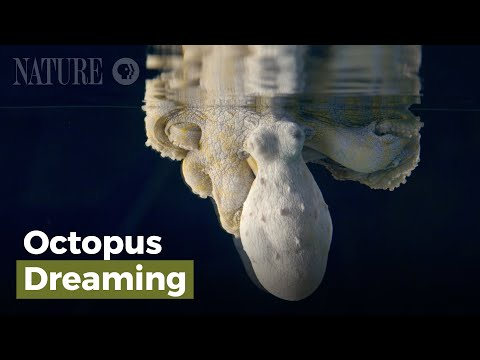 Watch a Dreaming Octopus Put on a Dazzling Color Show