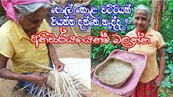 පොල් කොළ වට්ටියක් වියමු | Coconut Leaf Craft Ideas - Coconut Leaf Botany | punnet | Srilanka Village