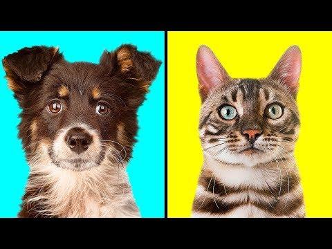 Кто Лучше: Собака или Кошка ?