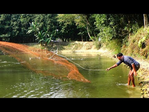 Net Fishing | Catching Fish With Cast Net | Net Fishing in the village (Part-138)
