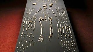 A Brand New Humanoid Species is Discovered in a Cave