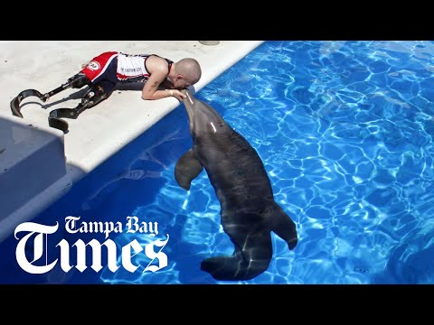 The making of Dolphin Tale - Tampa Bay Times