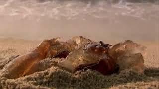 Дикая природа. Медузы