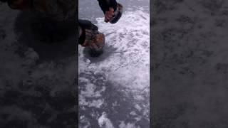 Щучки первый лед 2016
