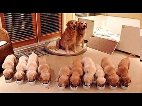 Animals Mothers - Beautiful, Happy And Meaningful Moment Of Animal Family - Kiki Tv 3