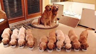 Animals Mothers  beautiful, happy and meaningful moment of animal family  kiki tv 3