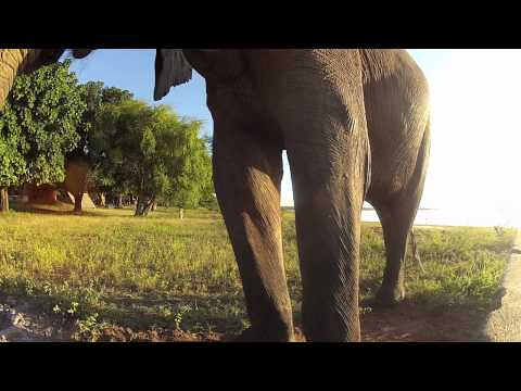 The African Elephant (2012)