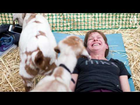 Oregon's famous Goat Yoga