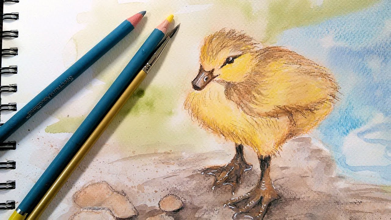 Duckling in watercolor pencil real time sketch along