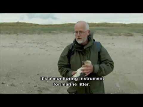 Granulés de Plastique / Animaux marins : Industrials granules in fulmar stomachs...