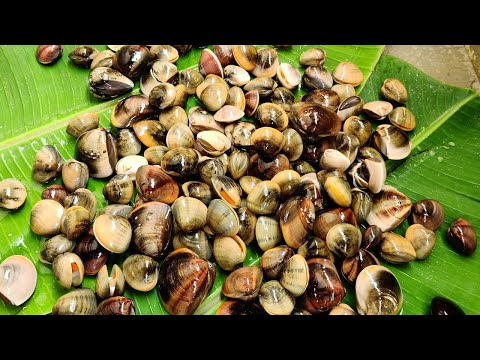 Catch N Cook Shells | How To Clean Seashells |  | Mouthwatering Clams Recipe | Seafood Shell