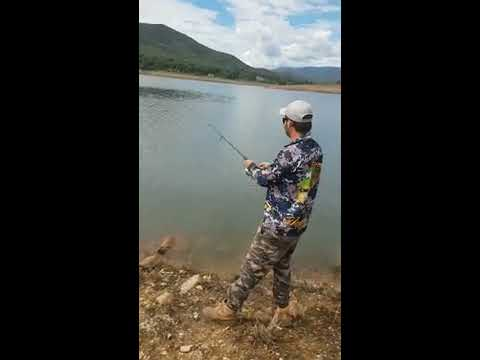 Micro curl tails (Blowering dam redfin) Pt1