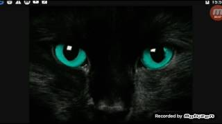 Песня:Чёрная кошка!