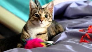 Кошка Ляля ищет добрые ручки!