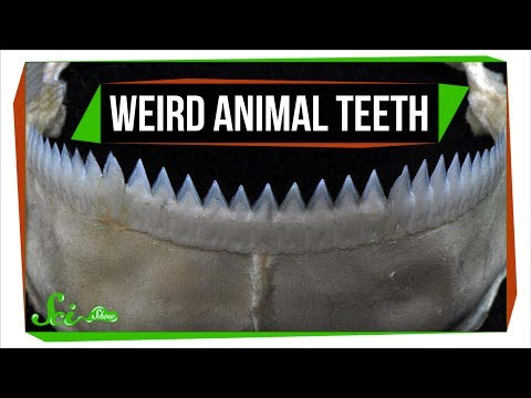 7 Animals with Super Weird (and Sometimes Horrifying) Teeth