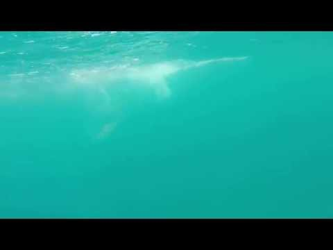 Cobia fishing with Danny Brown off Stuart FL 4/2015