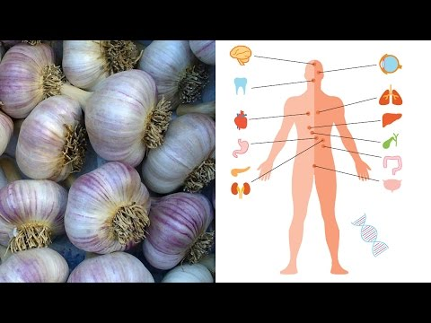 What is garlic good for? Benefits and medicinal uses for garlic