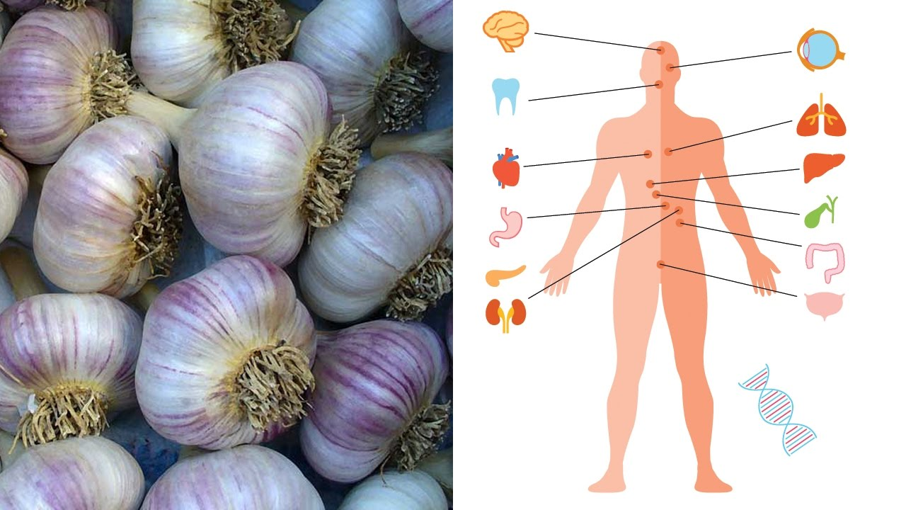 What is Garlic Good For Benefits and Medicinal Uses for