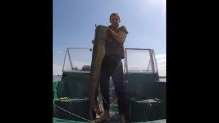 Рыбалка на трофейного сома. Способ ловли КВОК!