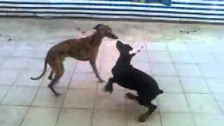Cako & baby Axe playing - part 1