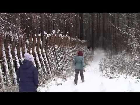 Деревянный забор - яблоко раздора