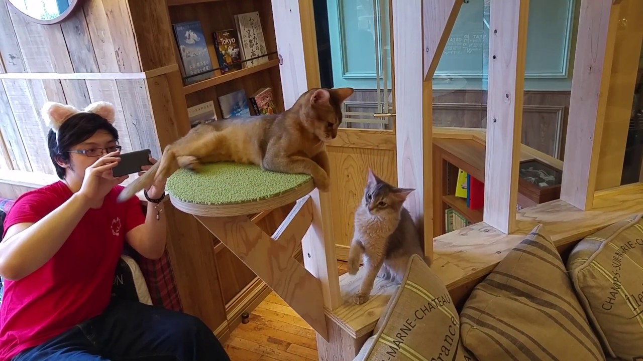 Cat Cafe Frankfurt