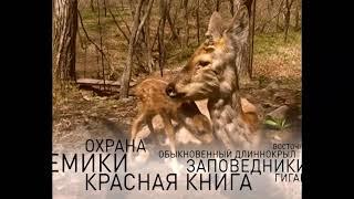 Животный мир Приморья