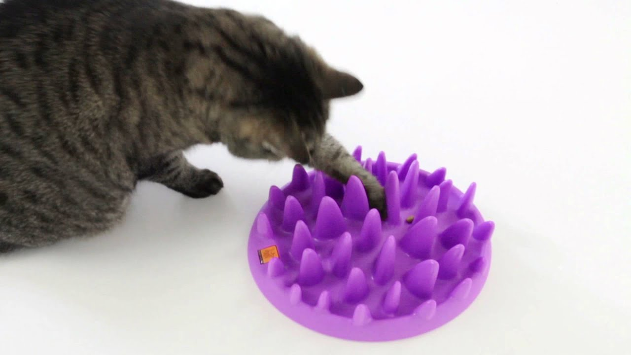 Free Dog Cat Bowl Image