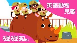 Peek-a-Zoo | 英語動物兒歌 | 碰碰狐!兒童兒歌
