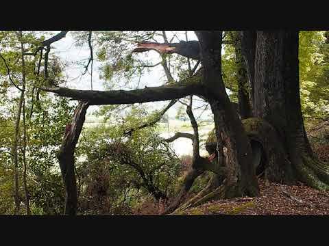 Sounds of the Koauau