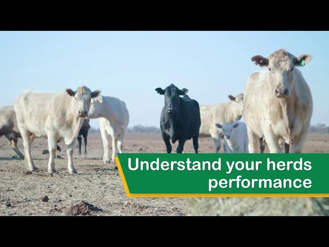 Meat & Livestock Australia - myMSA