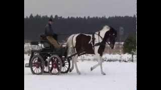 konie Bielin - og. REJENT