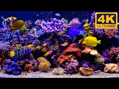 ***** THE BEST 4K Aquarium Video *****
