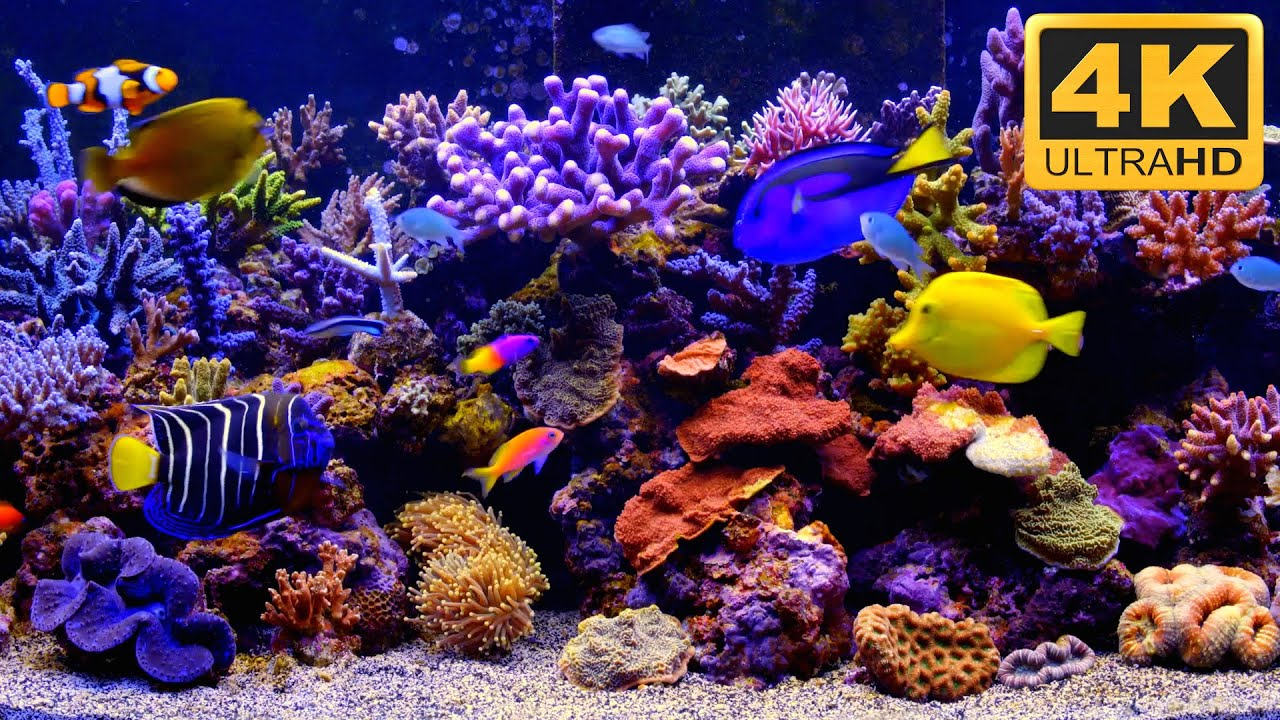 Aquarium screensaver fish tank 1080p hd -  The Best 4k Aquarium Video Youtube