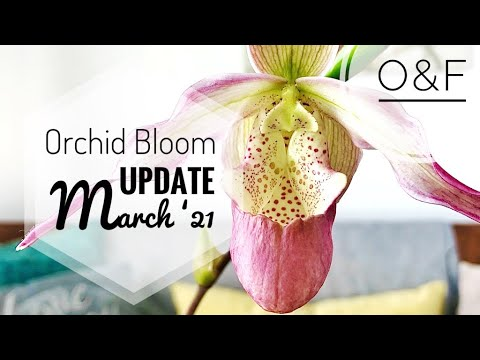 Orchid update -