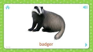 Badger - Wild Animals - Flashcards for Kids