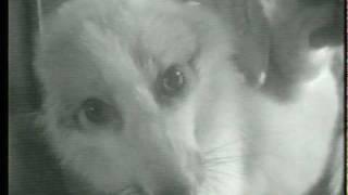 White Fox Anally Electrocuted_Undercover Video_Illinois Fur Farm