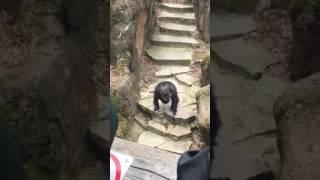 It Got Grandma!: Chimp at Zoo Throws Poo in Grandma's Face! thumbnail