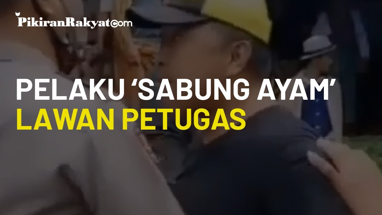 Petugas Bubarkan Arena Sabung Ayam, Warga di Toraja Utara Luapkan Emosi dan Berusaha Lawan Polisi